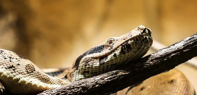 snake-1522257_960_720
